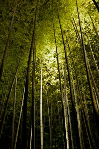 高台寺 - 竹林