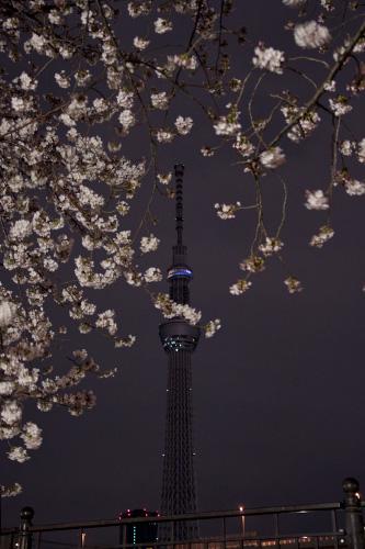 春の夜のスカイツリー