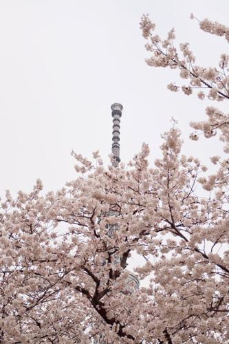 隅田公園から見たスカイツリー