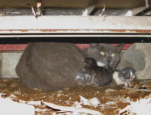 倉庫の下で出産した野良猫