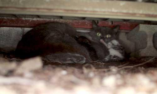 甘える子猫とそれどころでない母猫