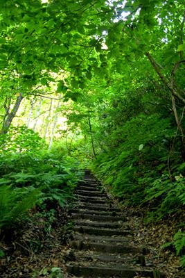 白神山地 ブナ林散策歩道