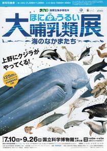 大哺乳類展-海のなかまたち チラシ