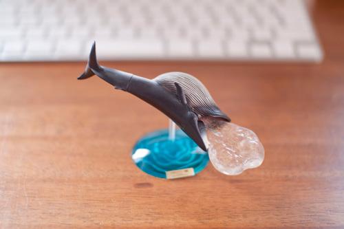 ナガスクジラの摂餌フィギュア